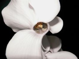 flower-1561058-640x480