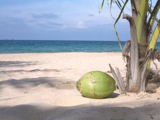 coconut-on-the-beach-1410034-640x480